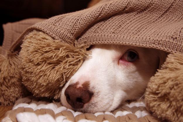 remedio de verme para cachorro