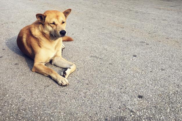 Atividades físicas para cães idosos