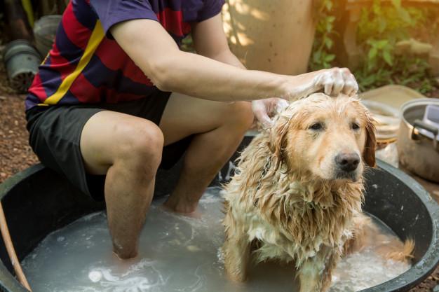 como tirar o cheiro de cachorro da casa