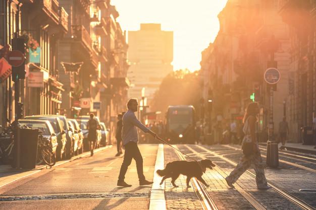cachorro trava no passeio