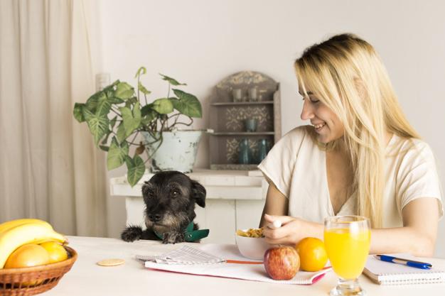 Alimentos prejudiciais para cachorro