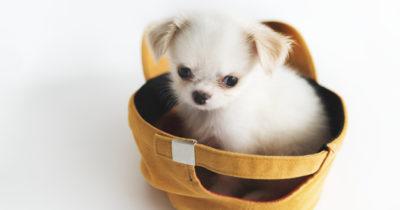 raças de cachorro pequenos