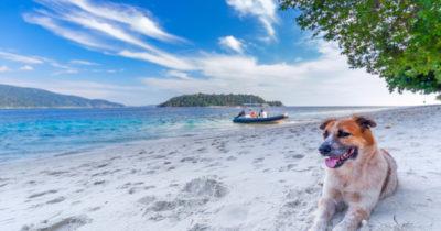 Vai ter Cachorro na Praia em Santos