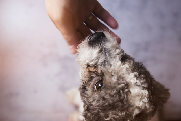 Cachorro filhote chorando