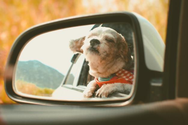 Como levar o cachorro no Uber