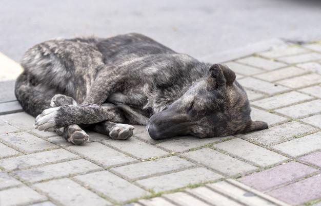 sarna em cachorro