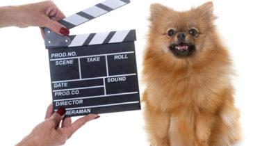 Cinema para cachorro no Rio de Janeiro