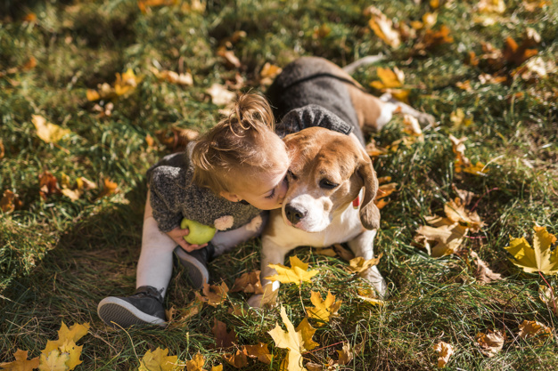 cães sentem saudade