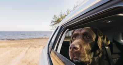 Seguro de viagens para cachorros