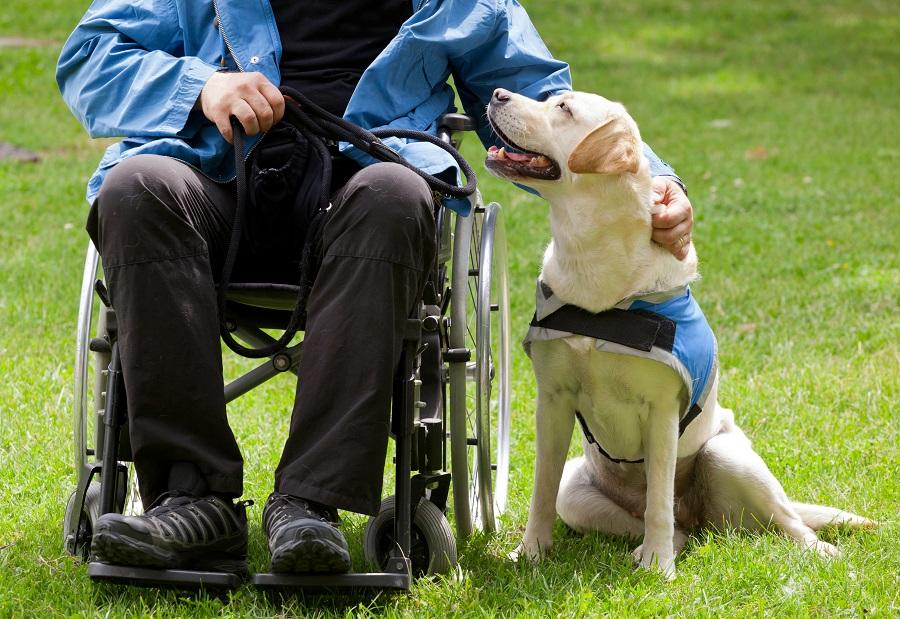oferta de cães-guias a pessoas com deficiência visual