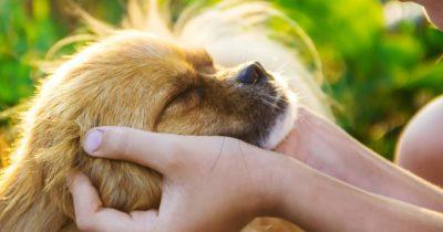 Fazer carinho em pets combate o estresse