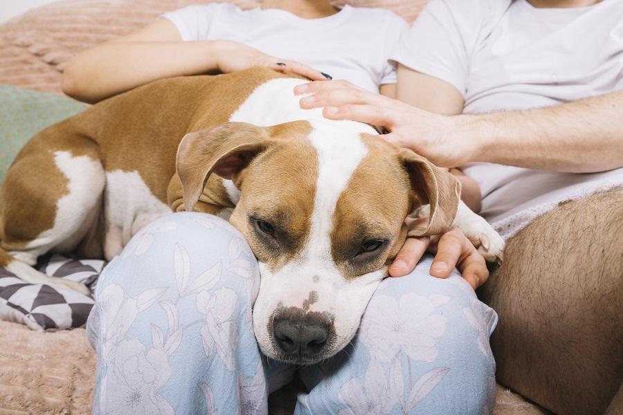 Casa boa para pets