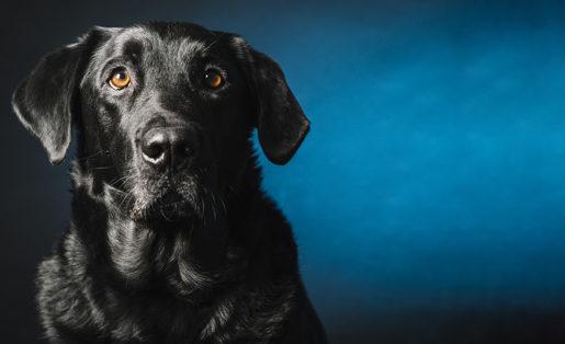 cão sozinho