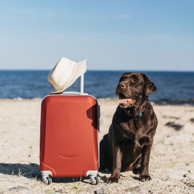 Dicas para levar o cachorro para praia