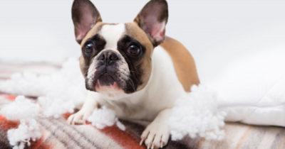 cachorro roendo papel higiênico