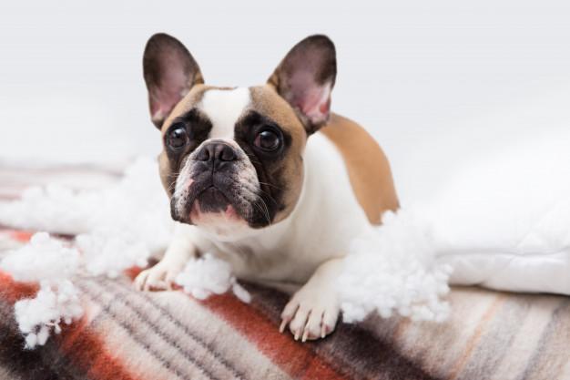 cachorro rasgando papel higiênico