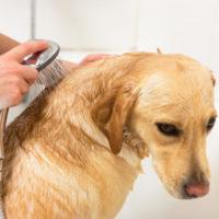 banho do cachorro