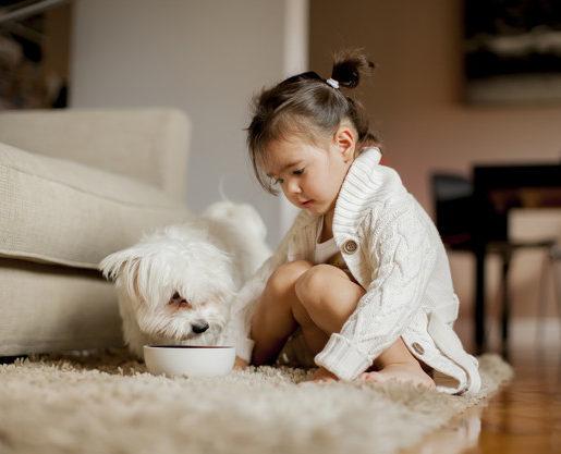 cuidar do cachorro