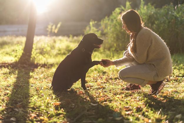 o que fazer ao encontrar um cachorro abandonado