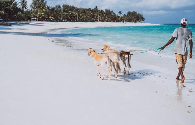 levar o cachorro para praia