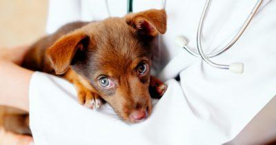 Cão salvou a vida da tutor
