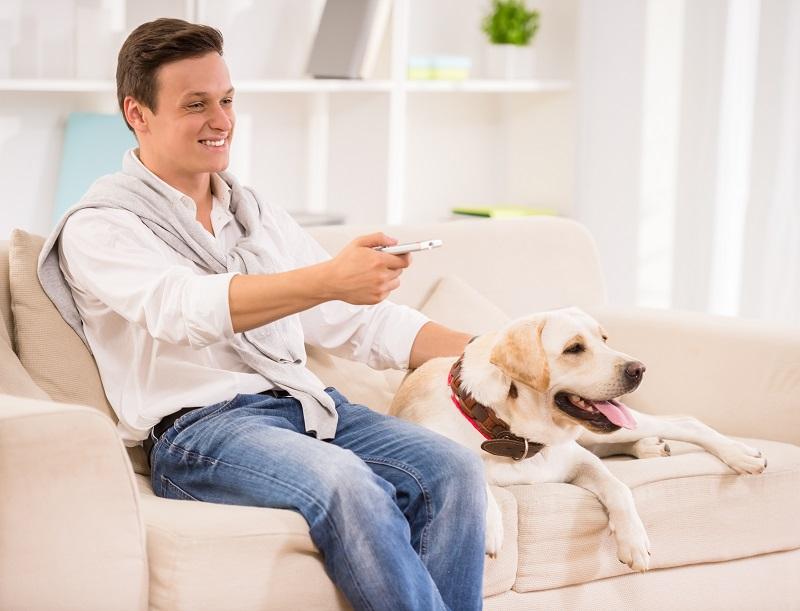 Cachorros e a TV