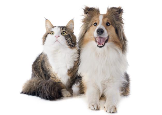 cachorro ou gato