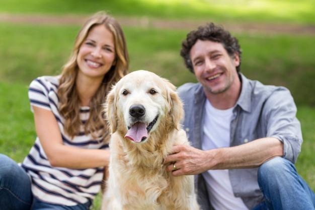 como criar vínculo com o cão
