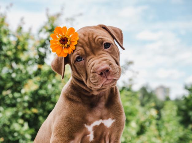 por que cães vivem menos