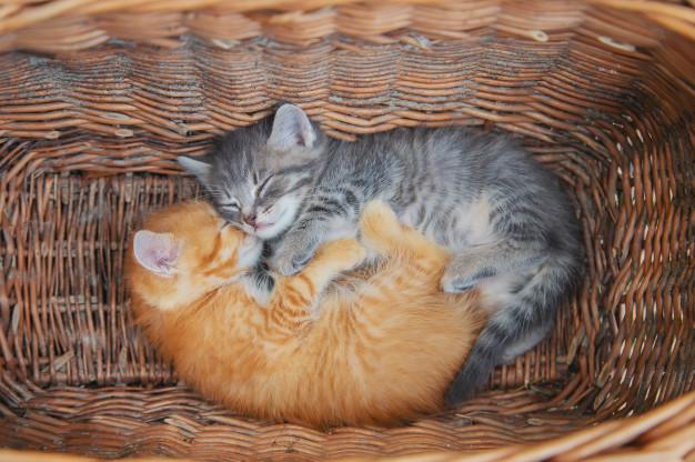 gatinhos dormindo