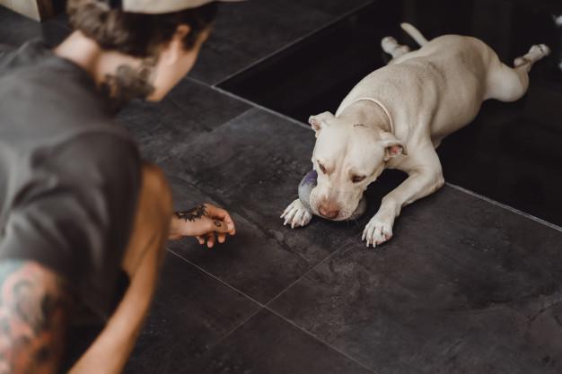 melhores brinquedos para cachorro