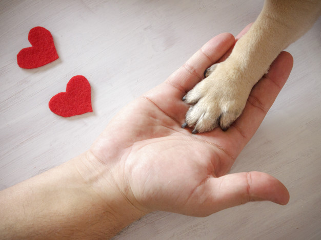 soft claws para cachorro