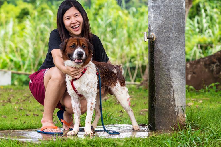 dedução de despesas veterinárias do Imposto de Renda