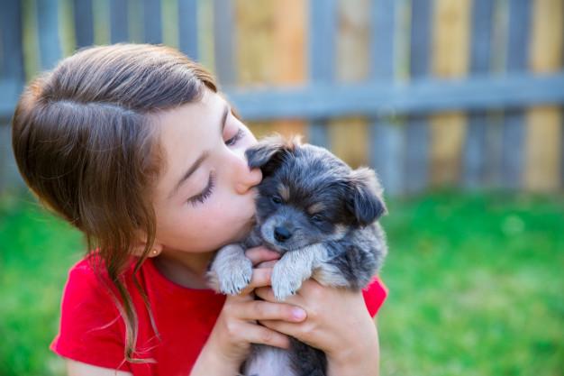 cães prevendo emoções