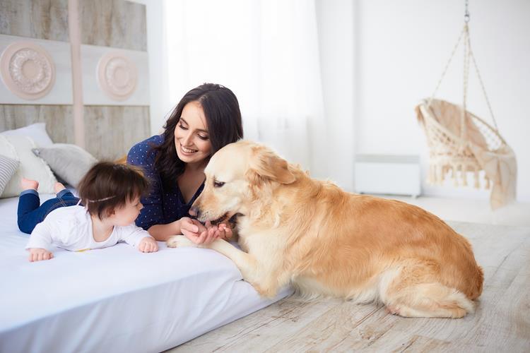 Relação entre bebê e cão
