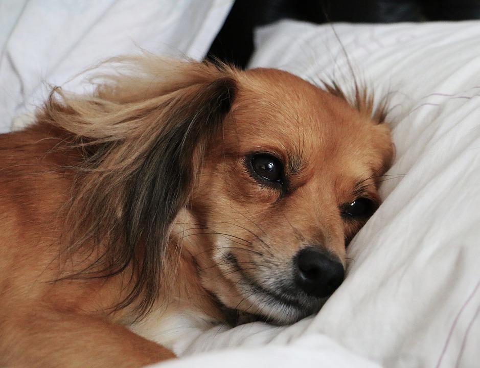 cachortto triste