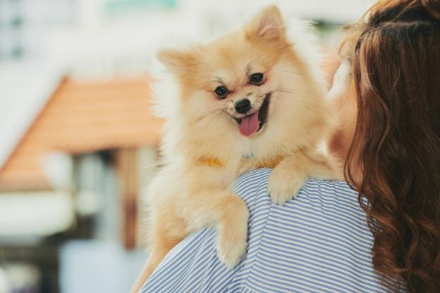 Cachorros felizes: 9 sinais de felicidade canina - Portal do Dog