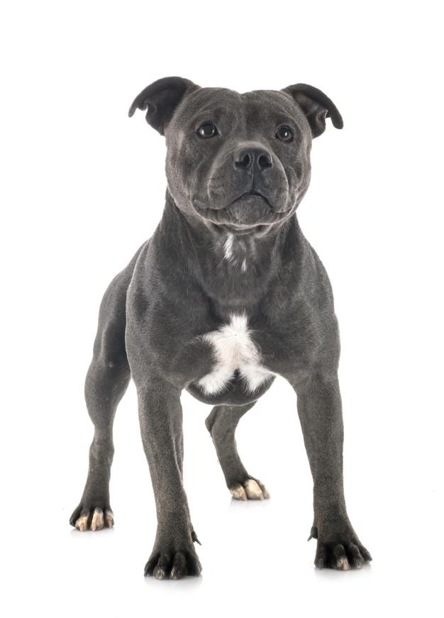 Cachorro preto em fundo branco