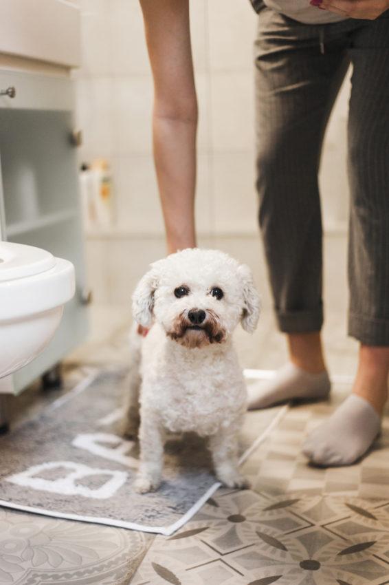 banheiro do cachorro