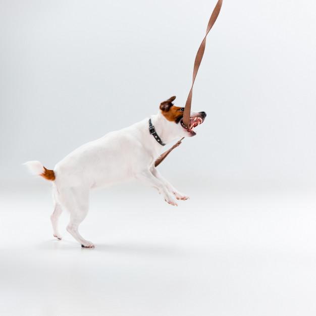 Brincando com o cachorro