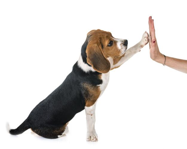 Adestramento online de cães