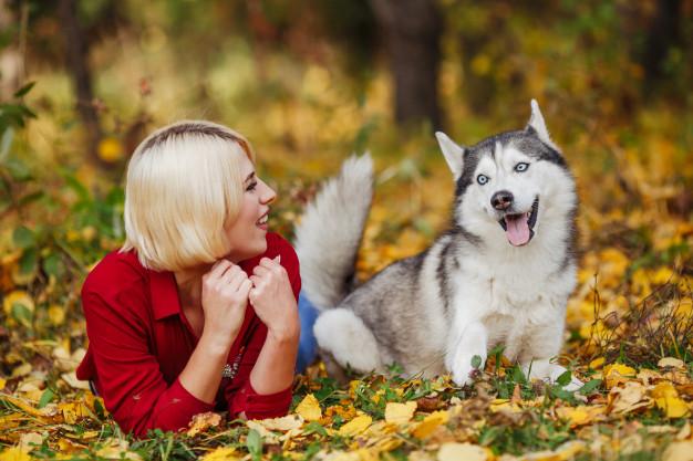 husky brincando