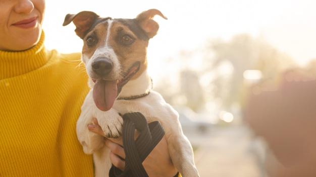 cão sorrindo com a língua de fora