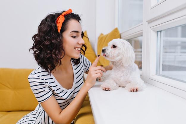 brincando com o cão em casa