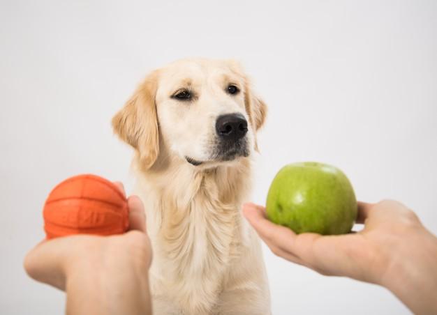 escolhendo o brinquedo do cachorro