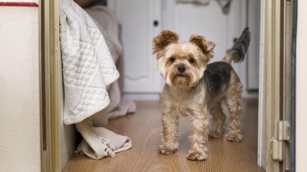 cachorro em casa