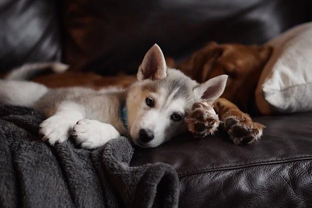 acupuntura canina