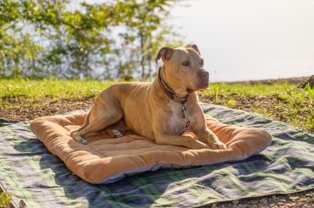câncer de pele em cachorro