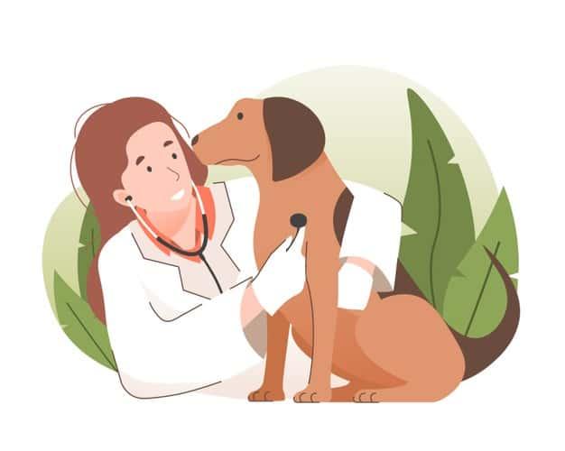 veterinário a domicílio